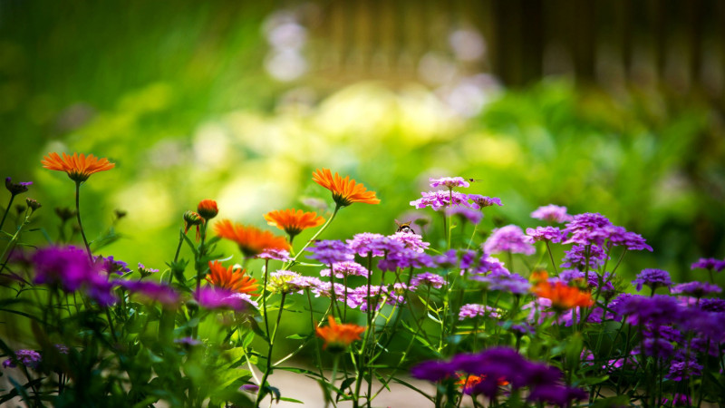 Select the Right Fertiliser for Garden Maintenance